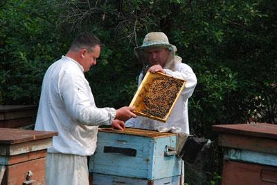 пчеловоды амурской области фото